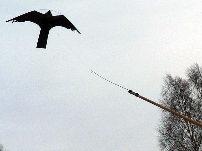 Strålande Drakjohan - Fågelskrämma Blacky Hawk RO-89