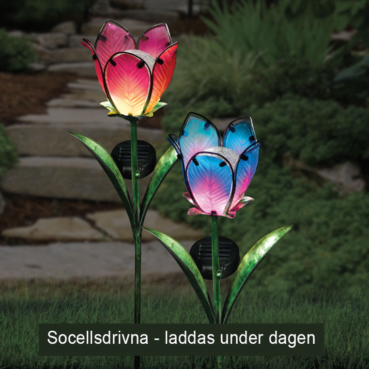 solar glass tulip